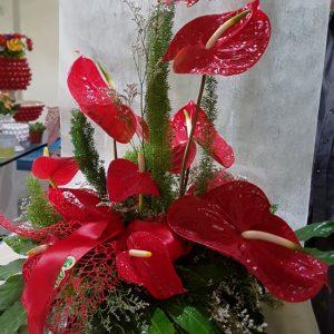 Vendita fiori e piante on line Messina